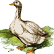 Icon: Seeker with the most <b>Goose Game</b> victories in their town